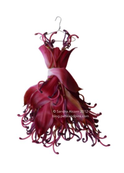 waratah gown for blog