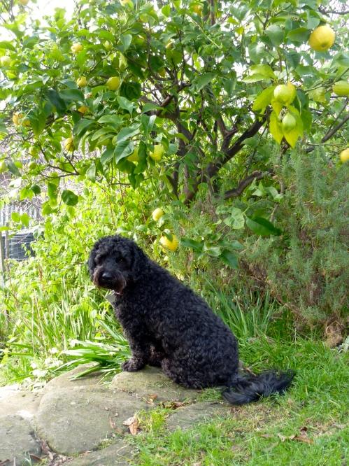 Agnes and the lemon tree