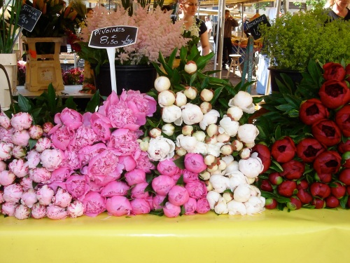 peonies on a flower stall in le Marais