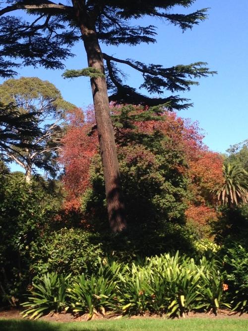 trees Fitzroy Gardens