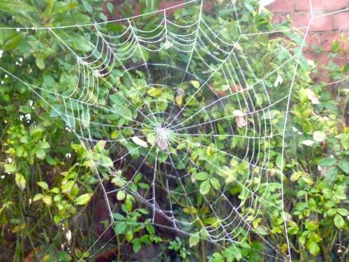 cobweb series