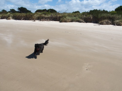 Agnes loves the beach!