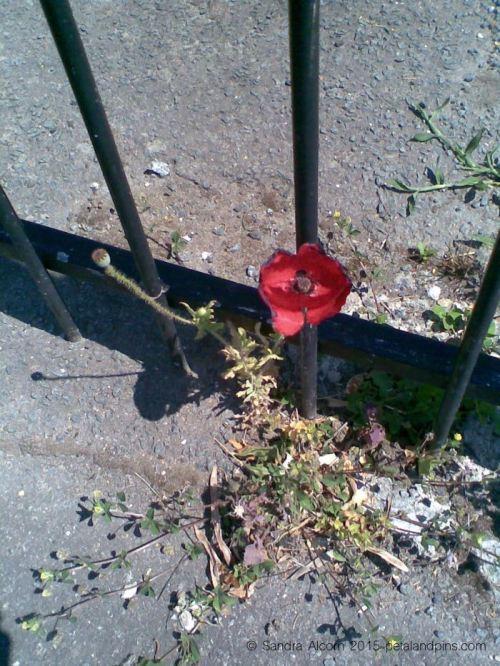 street poppy