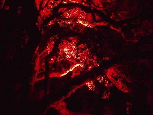 Royal Tasmanian Botanical Gardens trees lit red for Dark MoFo