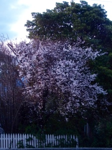 Blossom in July