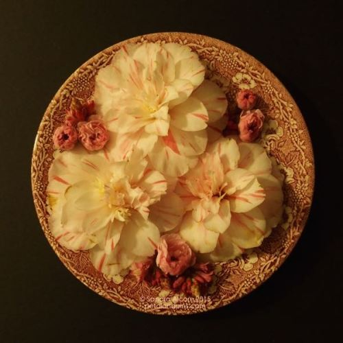 camellias and blossoms