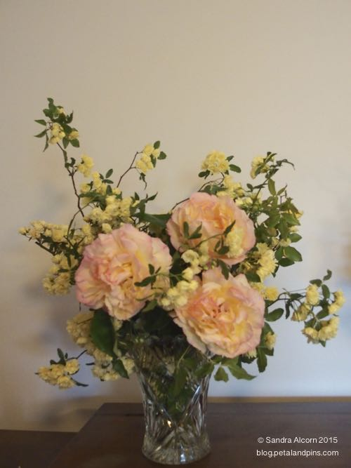 banksia rose and peace roses
