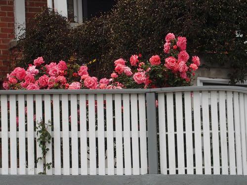 street roses