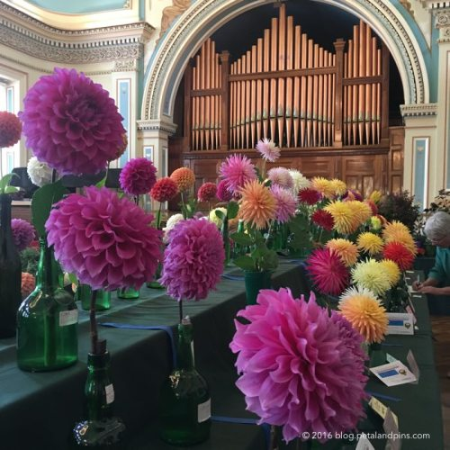 Dahlia Show at Hobart Town Hall