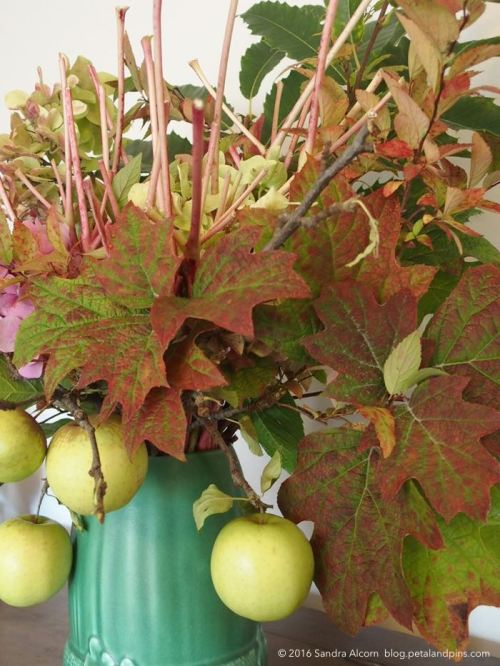 apples and oakleaf hydrangea leaves