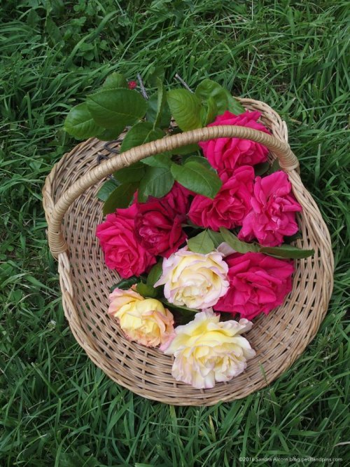 Basket of garden roses