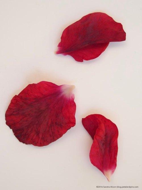 rose petals