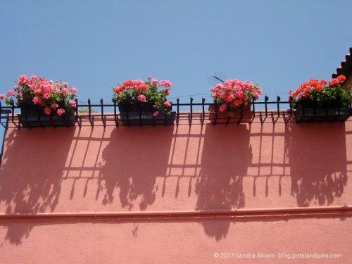 geraniums in Venice